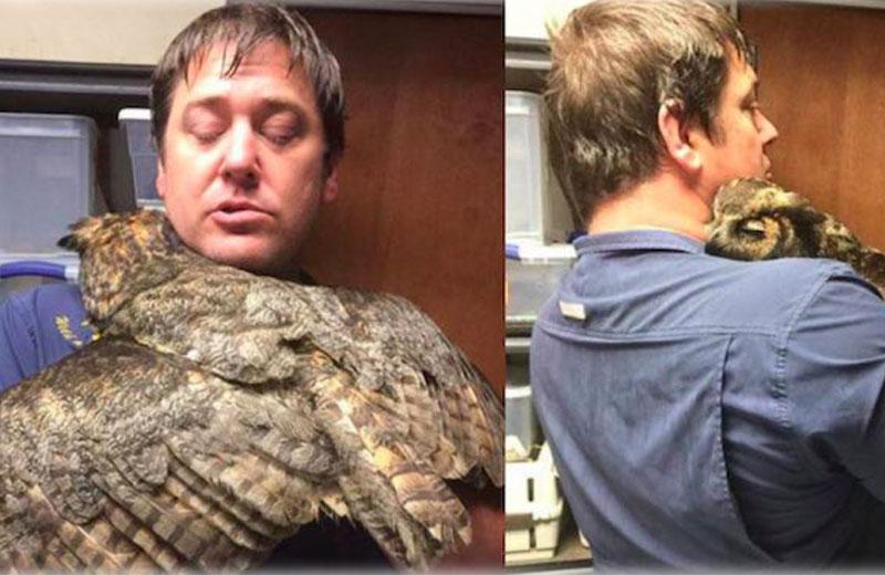 coruja-abraça-homem-close-1